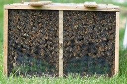 Thus begins beekeeping season